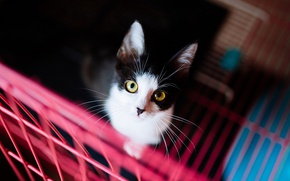 Picture cat, cat, look, background, black and white, dark, portrait, grille, kitty, yellow eyes, contrast, looks ...
