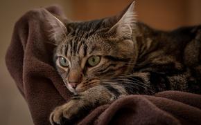 Picture cat, cat, kitty, Kota