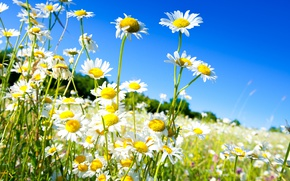 Wallpaper spring, the sky, the sun, field, chamomile, spring, flowers