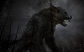 Picture night, wolf, monster, predator, mouth, fangs, grin, horror, monster, werewolf, werevolf