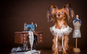 Picture dog, decoration, bow, Dogs, Yorkshire Terrier