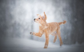 Picture winter, snow, paw, puppy, doggie