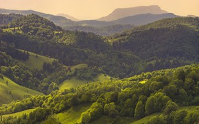 Picture mountains, panorama, forest