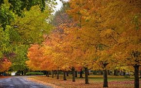 Picture road, autumn, trees, nature, Park