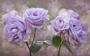 Wallpaper roses, petals, painting, flowers