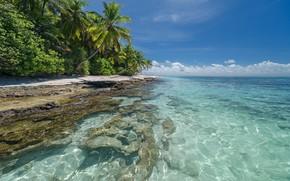 Picture sand, sea, beach, summer, palm trees, Tropics