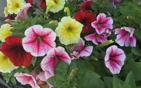 Wallpaper Flowers, Nature, Flower, Plant, Flora