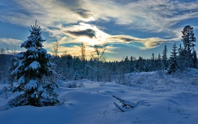 Picture winter, forest, snow, trees, spruce, Norway, the snow, Norway, Hedmark County, Hedmark