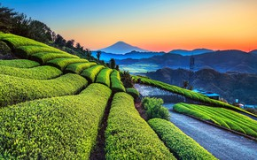 Picture twilight, sky, trees, landscape, nature, sunset, mountains, Garden, hedges, trellis