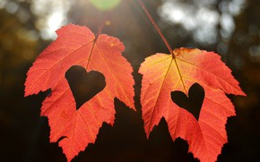 Picture autumn, leaves, hearts