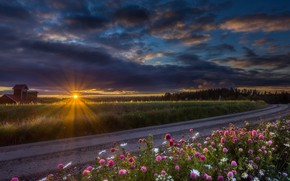 Picture road, sunset, flowers