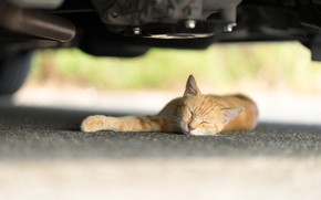 Picture cat, sleeping, red, under the car