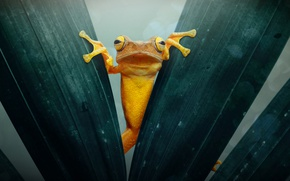 Picture macro, foliage, frog, toad, gold