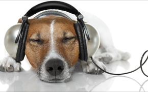 Wallpaper dog, headphones, relax, Music, animals, oops, dogs, other, information, latter
