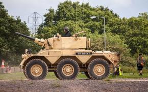 Wallpaper vegetation, man, armored vehicle, FV601 Saladin, Alvis Saladin, armored, FV 601 Saladin, soldier, pearls, British ...