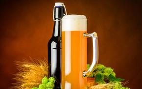Picture bottle, beer, mug, ears, hops