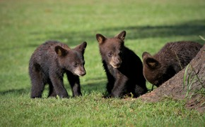 Picture nature, weed, kids, bears
