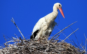 Picture the sky, nature, bird, socket, stork
