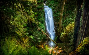 Picture greens, water, trees, waterfall
