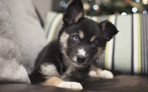 Picture puppy, house, dog
