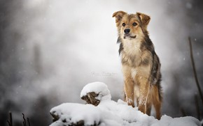 Picture winter, look, dog