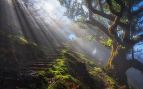 Wallpaper stage, haze, tree, trail, fog, nature, light, rays, morning