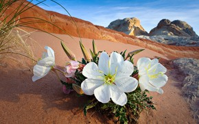 Picture sand, the sky, flowers, rocks