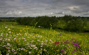 Picture Nature, Flowers, Spring, Field