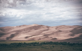 Picture sand, forest, desert, plain, dunes, 8k+