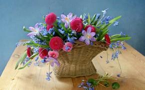 Picture bouquet, crocuses, basket, Daisy