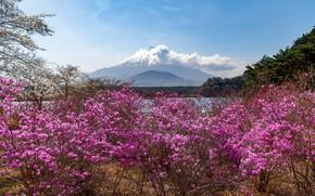 Picture landscape, mountain, the volcano
