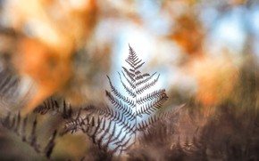 Picture autumn, leaves, fern