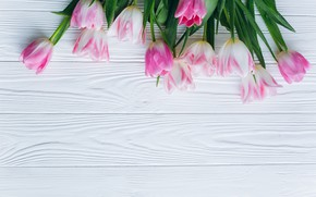 Picture flowers, tulips, pink, fresh, wood, pink, flowers, beautiful, tulips, spring, tender