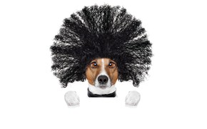 Picture face, creative, hair, humor, paws, hairstyle, white background, Jack Russell Terrier