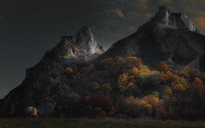 Wallpaper forest, autumn, trees, clouds, bull, cow, mountains