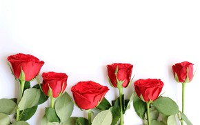 Picture flowers, roses, bouquet, red, red, wood, flowers, romantic, roses