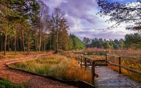 Wallpaper Kirchwalsede, autumn, grass, clouds, forest, river, leaves, track, trees, Germany, bridges, Saxony, Park