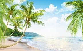 Picture sand, sea, beach, nature, the ocean, summer, beach, sea, sunset, island, Maldives, crystal, sand beach, …