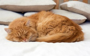 Picture cat, cat, pillow, red, sleeping, bed, lies, bokeh