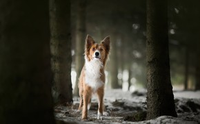 Picture forest, each, dog