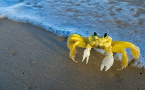Picture water, nature, shore, Atlantic crab-Ghost