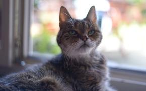 Picture cat, mustache, muzzle