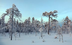 Picture winter, forest, snow, nature