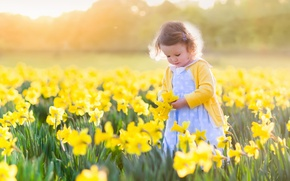 Picture field, the sun, flowers, child, girl, fields, daffodils, little girls, daffodils