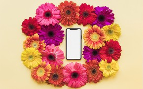 Picture flowers, spring, frame, colorful, chrysanthemum, flowers, smartphone, spring, bright