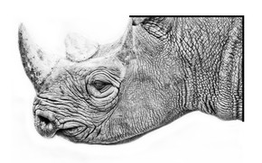 Picture nature, background, Rhino