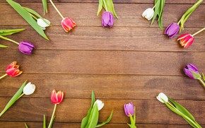 Picture flowers, colorful, tulips, red, white, wood, flowers, tulips, spring, purple