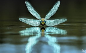 Picture water, dragonfly, Dragonfly