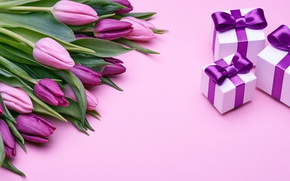 Wallpaper pink, fresh, love, bow, tulips, pink, tulips, romantic, gift, purple, bouquet, gifts, flowers