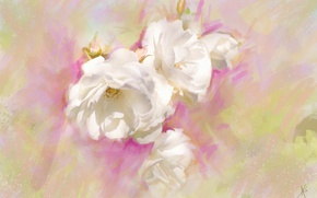 Picture flowers, figure, graphics, rose, roses, treatment, picture, petals, art, white, painting, buds, gently, easy, drawing, …